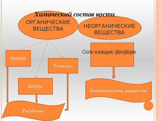Химический состав кости. НЕОРГАНИЧЕСКИЕ ВЕЩЕСТВА Соли кальция, фосфора. ОРГА...