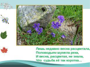 Лишь недавно весна расцветала, Половодьем шумела река, И весна, расцветая, н
