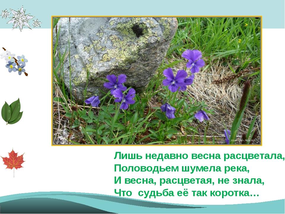 Лишь недавно весна расцветала, Половодьем шумела река, И весна, расцветая, н...