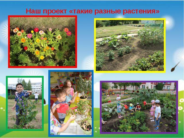Наш проект «такие разные растения»