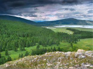 Это хвойный лес. Он занимает большую часть лесной зоны. Тайга