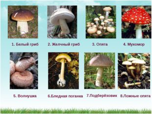1. Белый гриб 2. Желчный гриб 3. Опята 4. Мухомор 5. Волнушка 6.Бледная поган