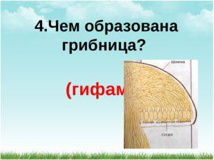 4.Чем образована грибница? (гифами)