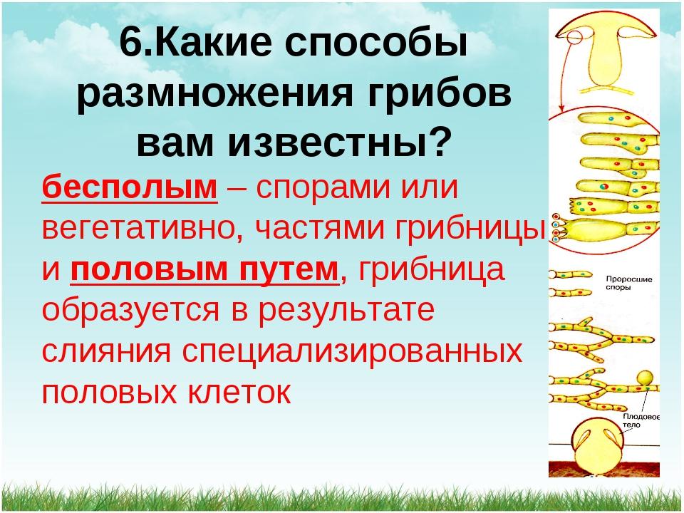 6.Какие способы размножения грибов вам известны? бесполым – спорами или вегет...