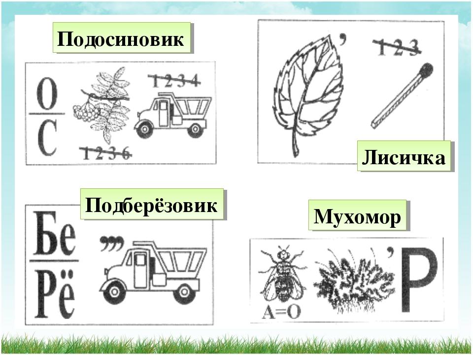 Подосиновик Лисичка Мухомор Подберёзовик