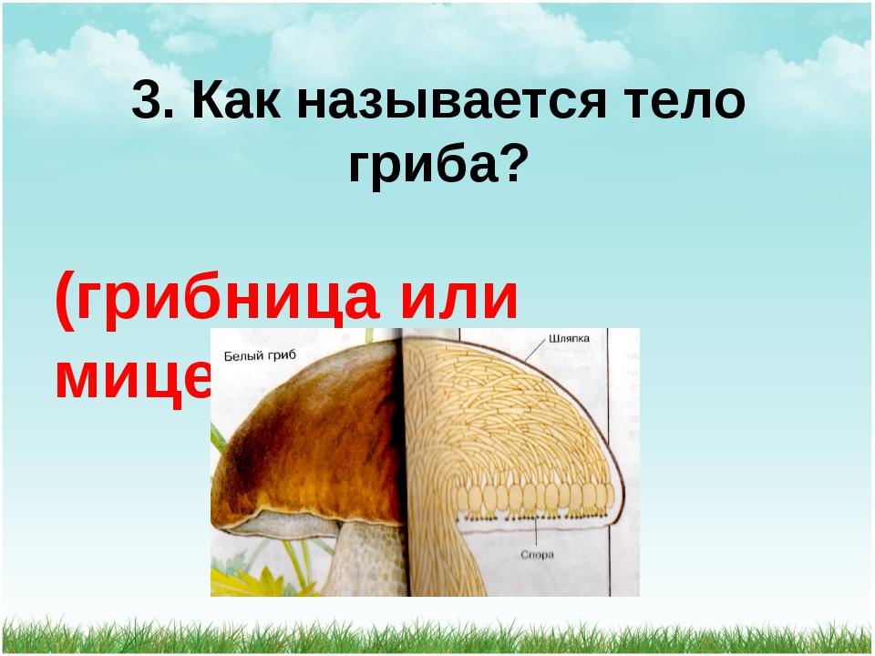3. Как называется тело гриба? (грибница или мицелий)