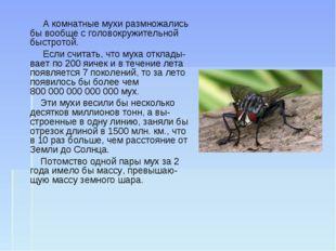 А комнатные мухи размножались бы вообще с головокружительной быстротой. Если