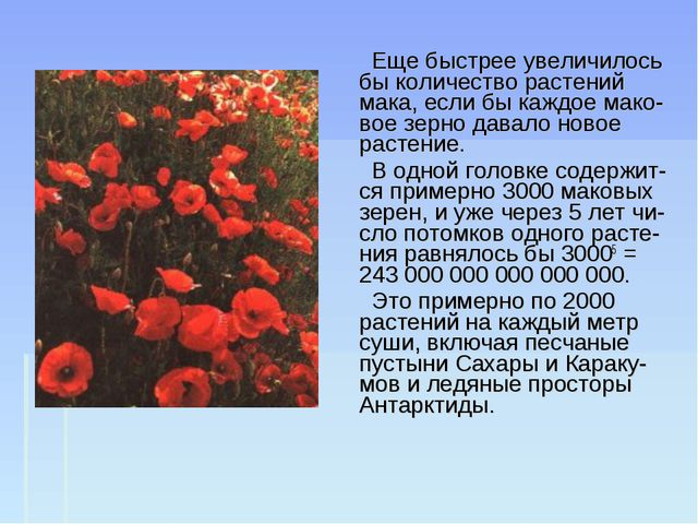 Еще быстрее увеличилось бы количество растений мака, если бы каждое мако-вое...