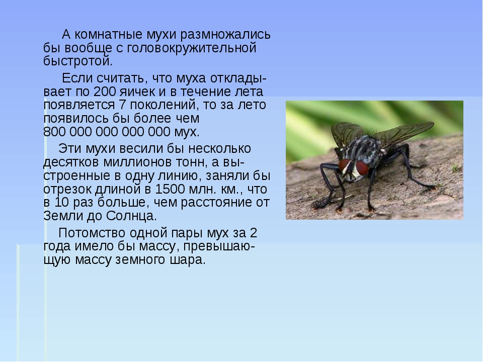 А комнатные мухи размножались бы вообще с головокружительной быстротой. Если...
