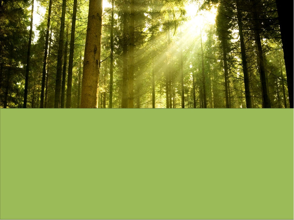 «Леса учат человека понимать прекрасное» А.П.Чехов
