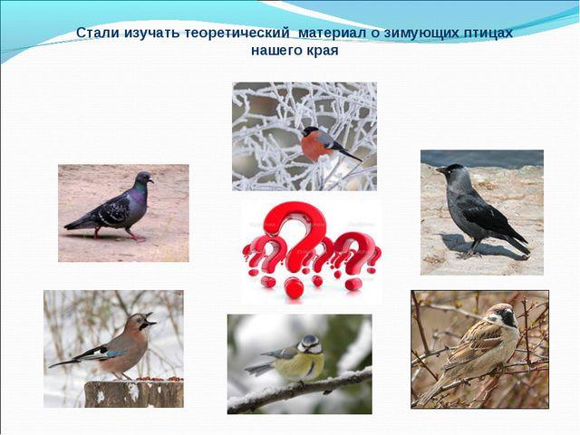 Стали изучать теоретический материал о зимующих птицах нашего края