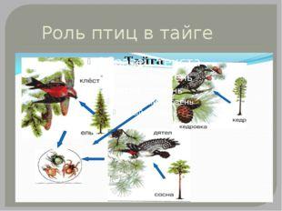 Роль птиц в тайге