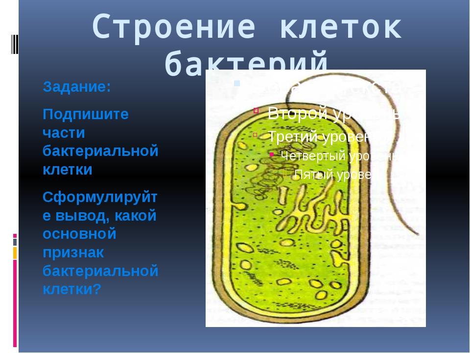 Строение клеток бактерий Задание: Подпишите части бактериальной клетки Сформу...