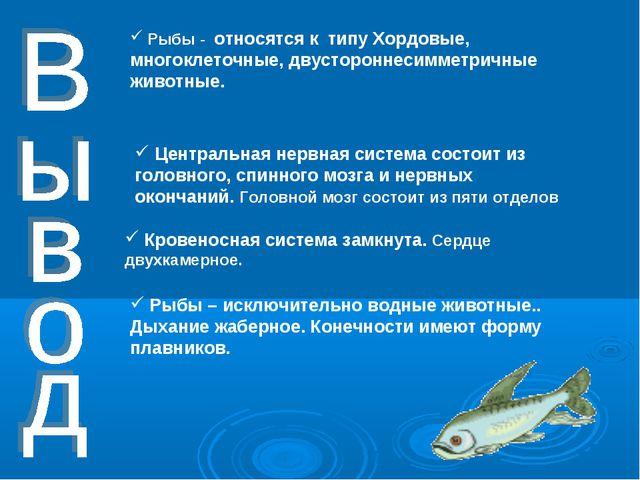 Рыбы - относятся к типу Хордовые, многоклеточные, двустороннесимметричные жи...