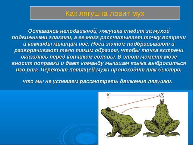 Оставаясь неподвижной, лягушка следит за мухой подвижными глазами, аее мозг...