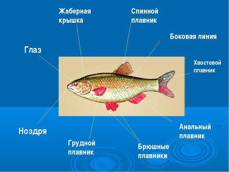 Болезни аквариумных рыб лечение фото симптомы