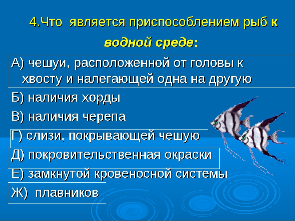 4.Что является приспособлением рыб к водной среде: А) чешуи, расположенной от...