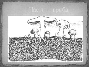 Части гриба