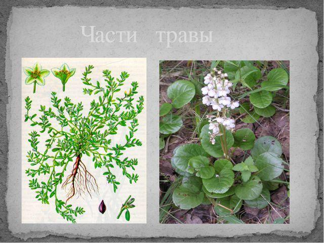 Части травы
