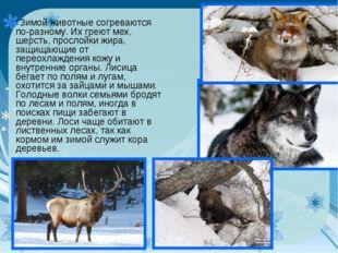 Зимой животные согреваются по-разному. Их греют мех, шерсть, прослойки жира,
