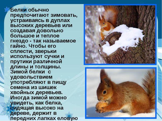 Белки обычно предпочитают зимовать, устраиваясь в дуплах высоких деревьев или...