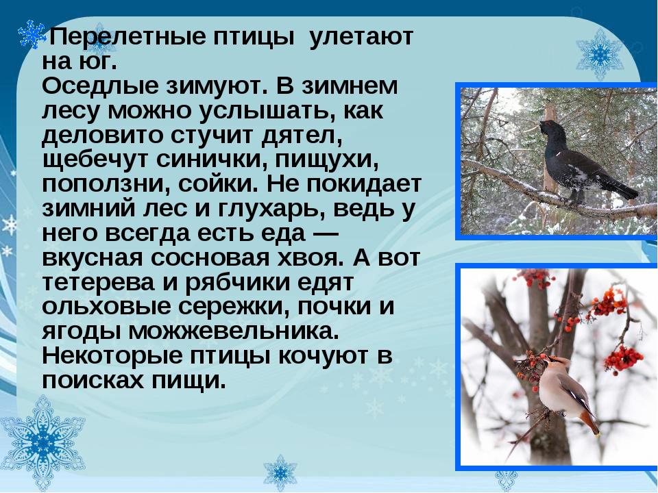 Перелетные птицы улетают на юг. Оседлые зимуют. В зимнем лесу можно услышать,...