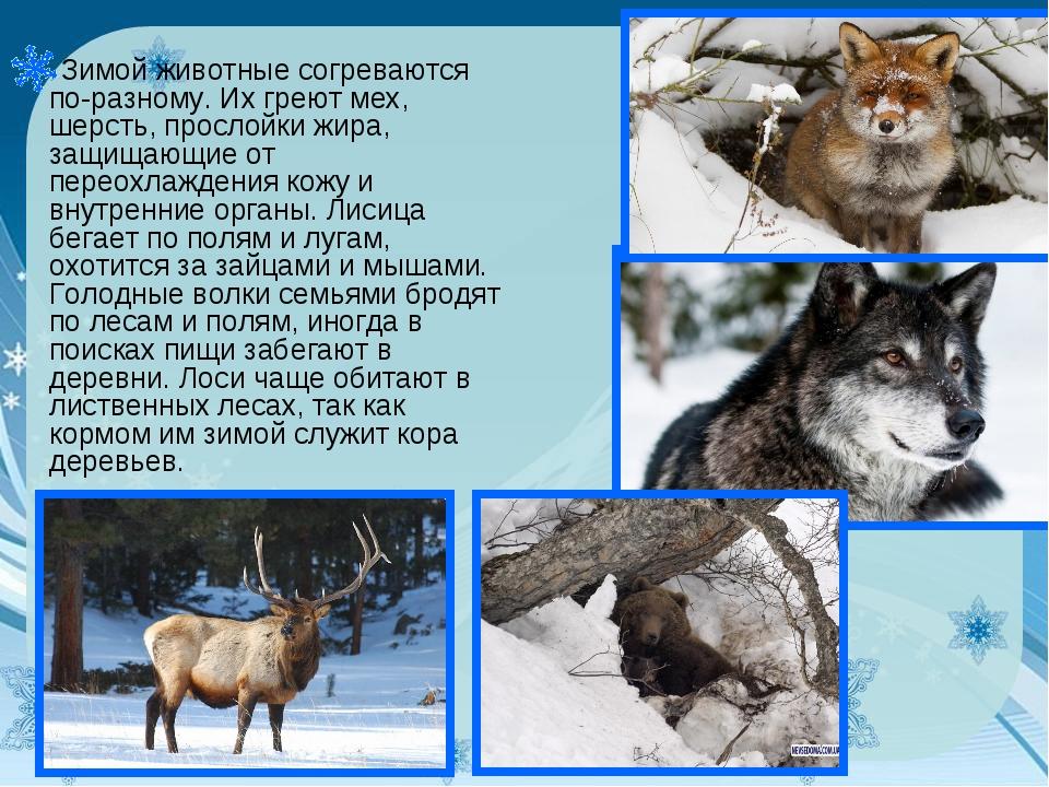Зимой животные согреваются по-разному. Их греют мех, шерсть, прослойки жира,...