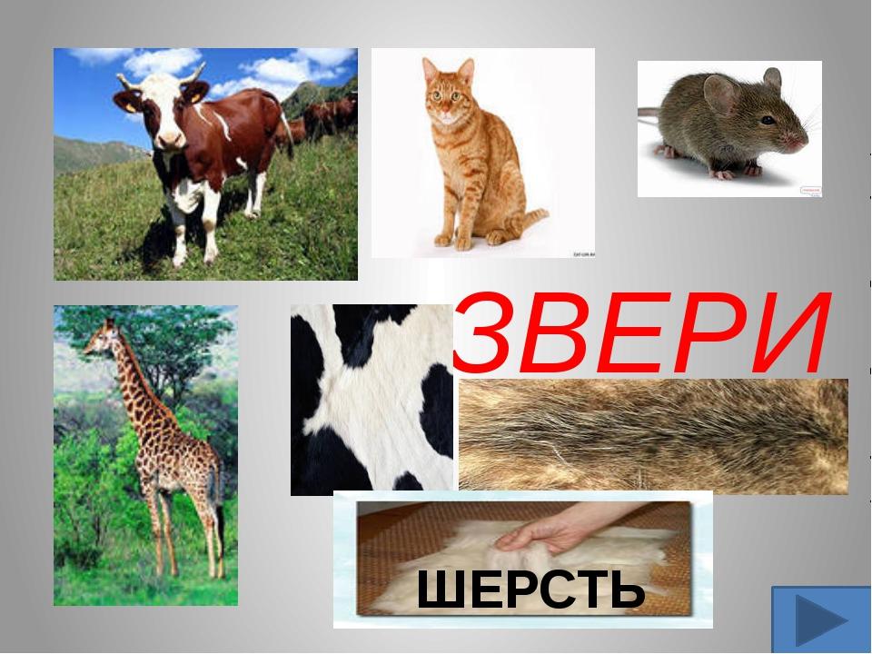 ЗВЕРИ ШЕРСТЬ