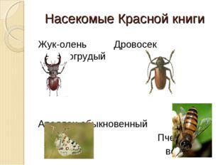 Насекомые Красной книги Жук-олень Дровосек зубчатогрудый Аполлон обыкновенный