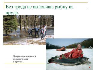 Без труда не выловишь рыбку из пруда. Энергия превращается из одного вида в д