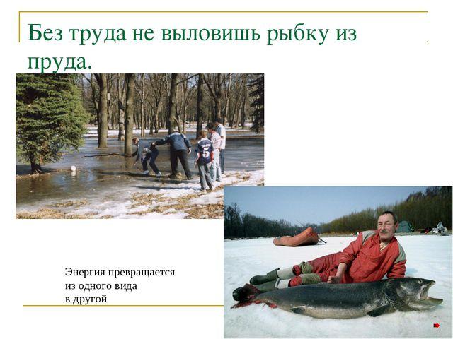 Без труда не выловишь рыбку из пруда. Энергия превращается из одного вида в д...
