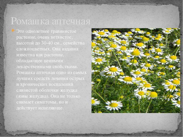 Это однолетнее травянистое растение, очень ветвистое, высотой до 30-40 см., с...