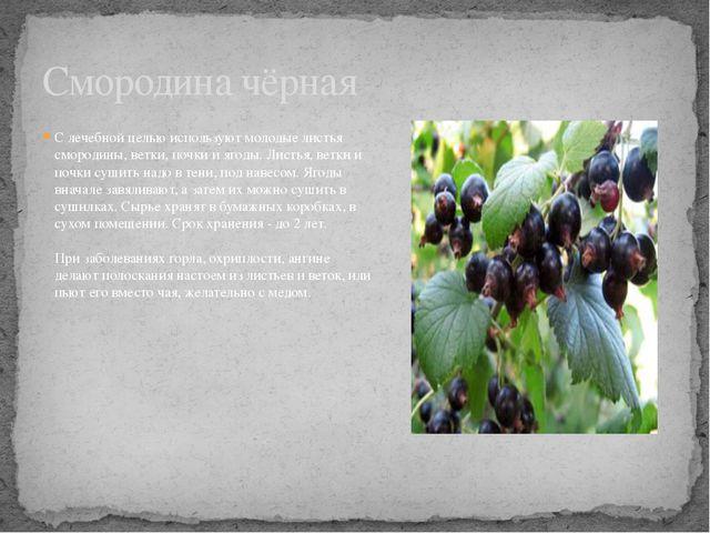 С лечебной целью используют молодые листья смородины, ветки, почки и ягоды. Л...