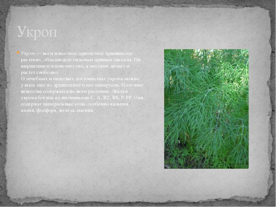 Укроп— всем известное однолетнее травянистое растение, обладающее сильным пр...