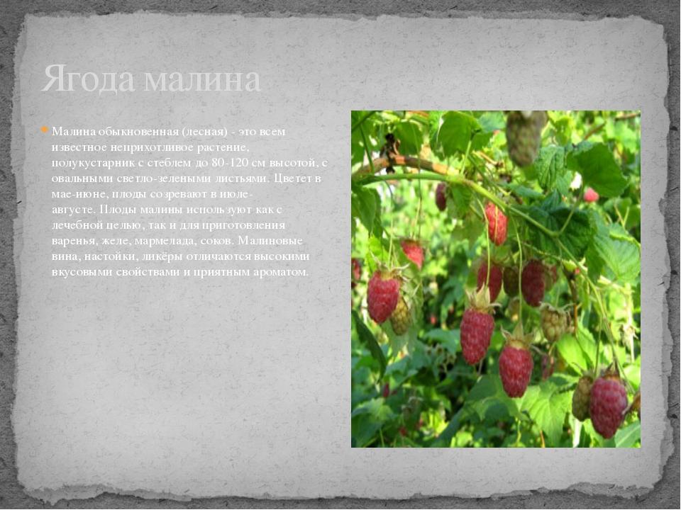 Малина обыкновенная (лесная) - это всем известное неприхотливое растение, пол...
