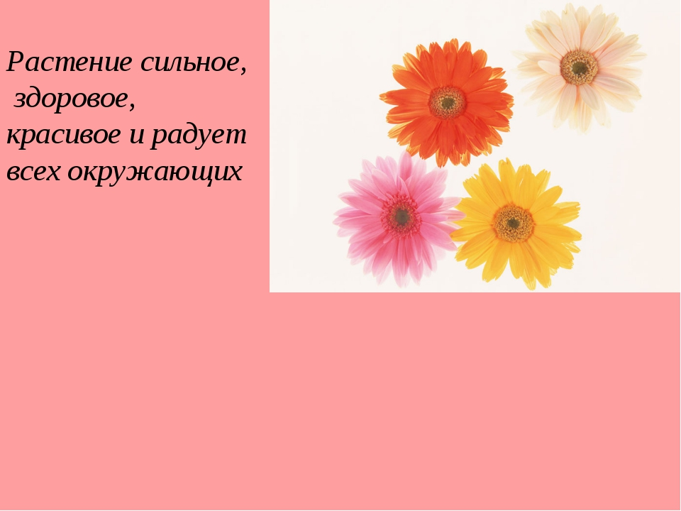 Растение сильное, здоровое, красивое и радует всех окружающих
