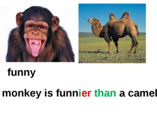 funny A monkey is funnier than a camel