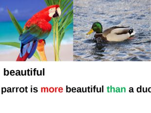 beautiful A parrot is more beautiful than a duck