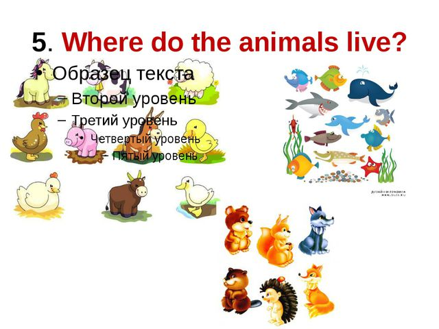 5. Where do the animals live?
