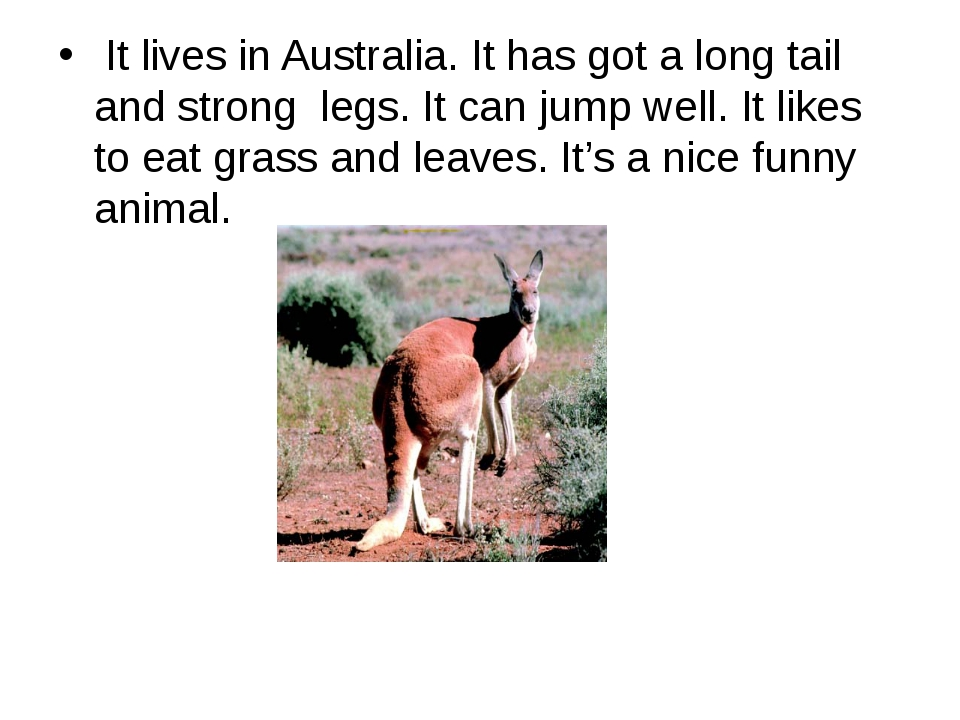 It lives in Australia. It has got a long tail and strong  legs. It can jump...