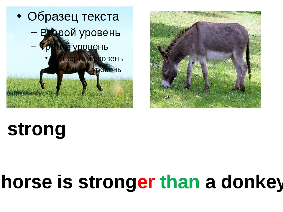 strong A horse is stronger than a donkey