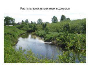 Растительность местных водоемов