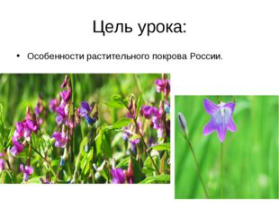 Цель урока: Особенности растительного покрова России.