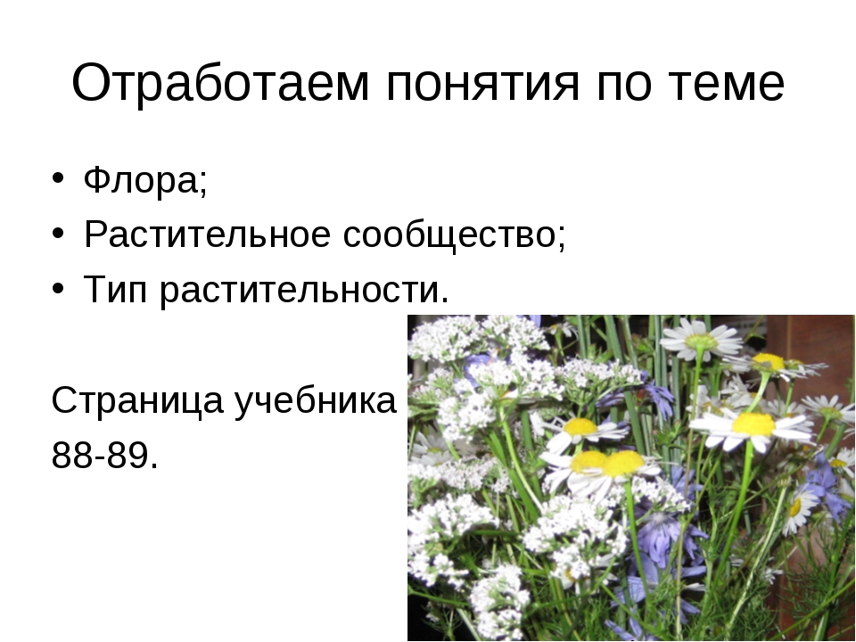 Отработаем понятия по теме Флора; Растительное сообщество; Тип растительности...