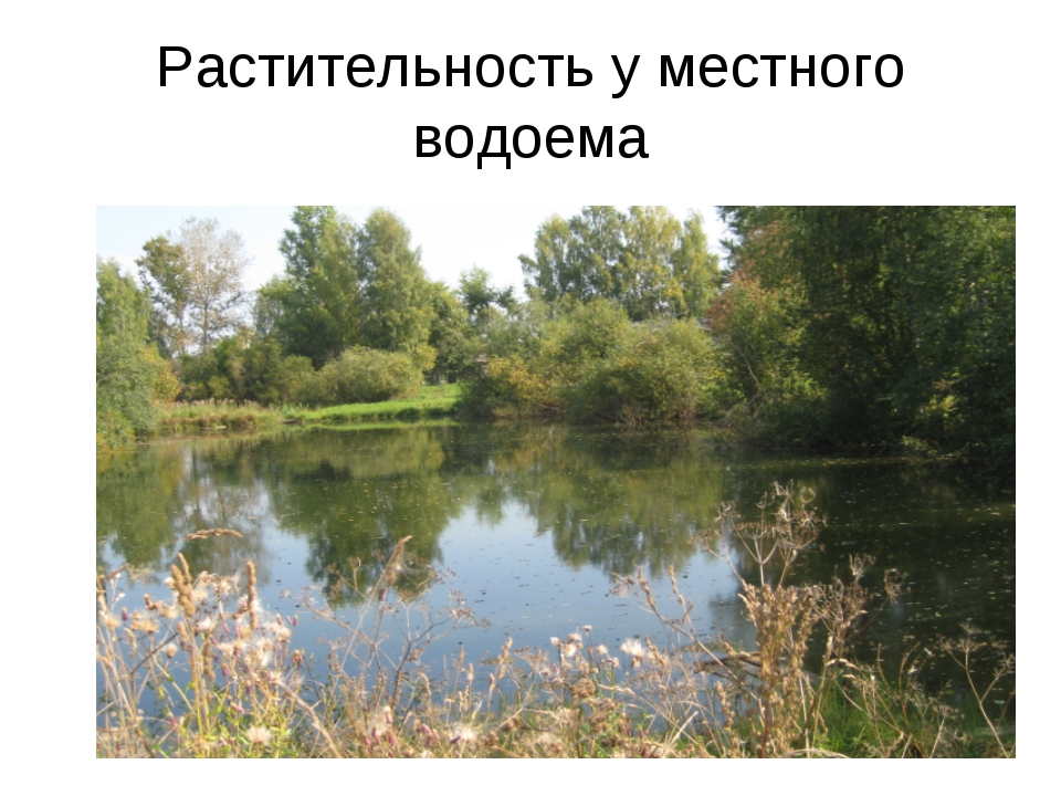 Растительность у местного водоема