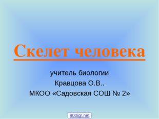 Скелет человека учитель биологии Кравцова О.В.. МКОО «Садовская СОШ № 2» 900i