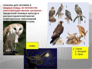 полезны для человека и хищные птицы, во множестве уничтожающие мелких грызуно
