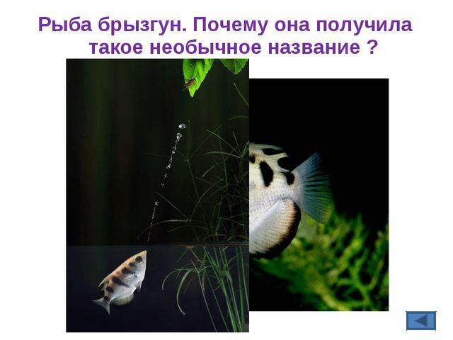 Рыба брызгун. Почему она получила такое необычное название ?