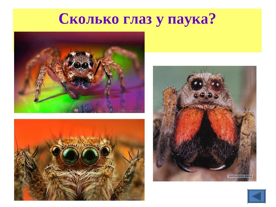 Сколько глаз у паука?