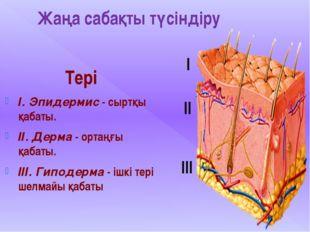 Жаңа сабақты түсіндіру Тері І. Эпидермис - сыртқы қабаты. ІІ. Дерма - ортаңғы